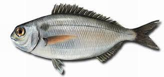 Pan con trazas de pescado