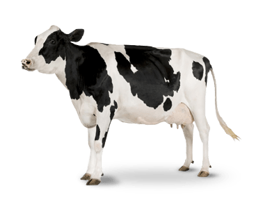 La Proteína de la harina